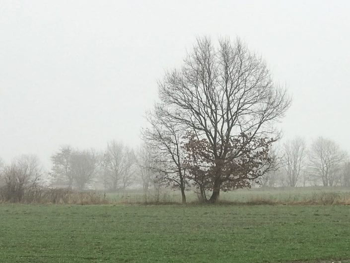 Mein Baum - Reinhard Muttersbach