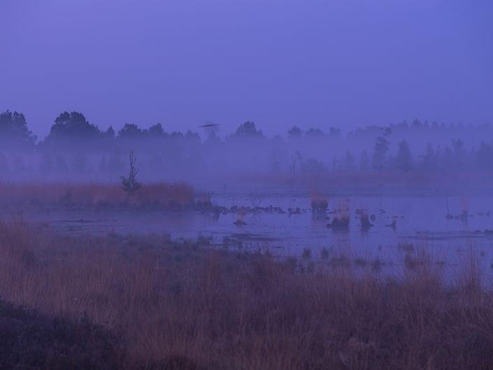 Irene Berger - Morgens im Moor