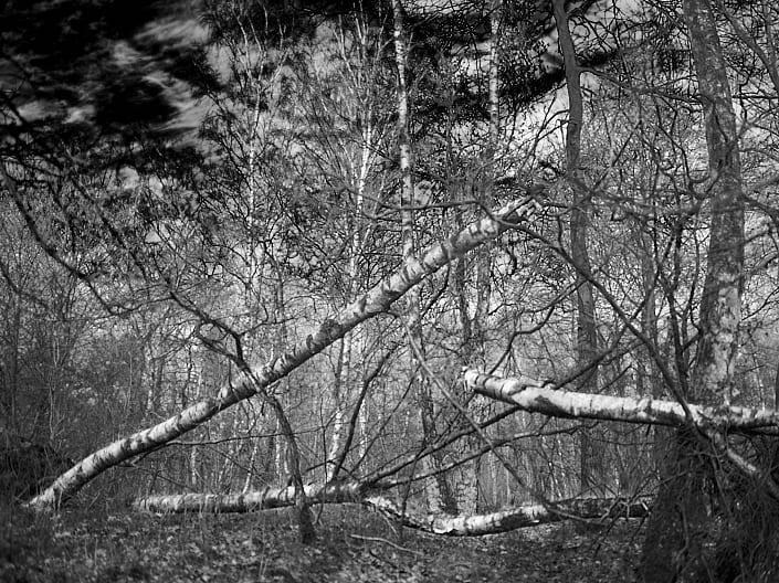 Peter Czikowski – Waldspaziergang